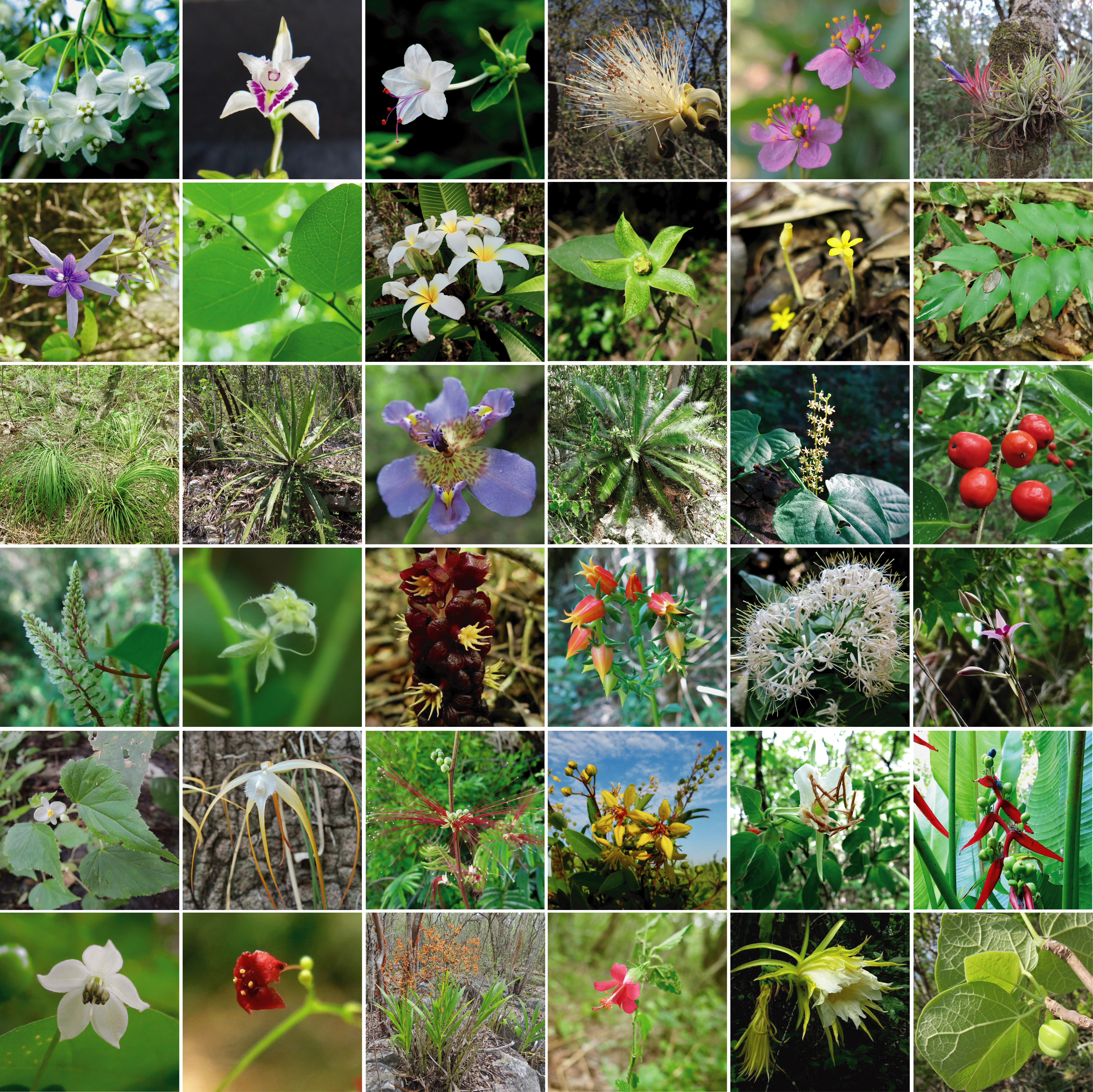 Algunas especies vegetales de la Reserva dela Biosfera Sierra del Abra Tanchipa